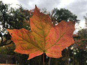 Autumn in GrandRapids
