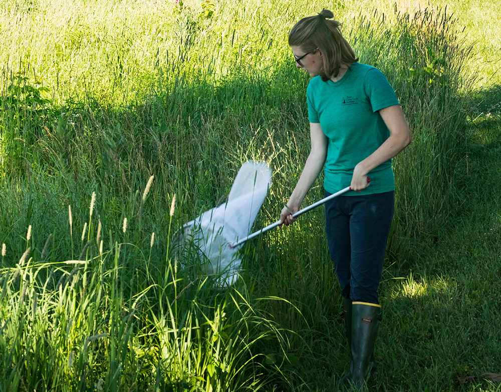 Dana VanHuis conducting research in the field.